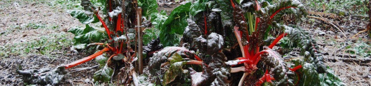 Kopřiva & Kopřiva – Ukázkový permakulturní projekt